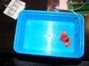 Ogrzewany układ testowy - pudełko od lodów, a rczej znajdujące się w nim powietrze